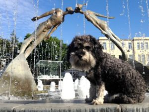 willie at the kissing fountain in Kharkiv